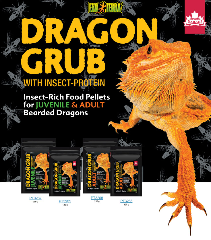 Exo Terra Dragon Grub