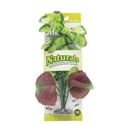 Marina Naturals Pennywort Silk Plant, M