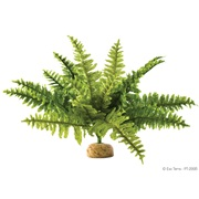 Exo Terra Rainforest Plant Boston Fern Medium