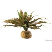 Exo Terra Desert Plant Star Cactus