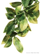 Exo Terra Jungle Plant Mandarin Small