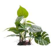 "Fluval Decorative Plants, Anubias, 20 cm (8"") with base"