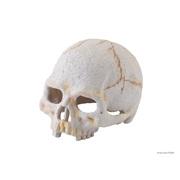 Exo Terra Primate Skull - Small