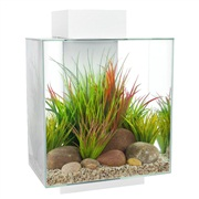 Fluval Edge 12  gal Aquarium Set - White