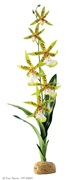 Exo Terra Rainforest Plant Spider Orchid