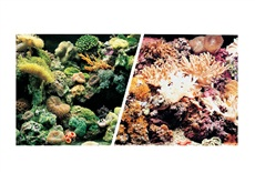 "Marina Double Sided Aquarium Background, Marine Reef/Coral Scenes, 45.7 cm X 7.6 m (18"" X 25 ft)"