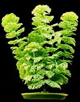 Marina Aquascaper Plastic Plant, Ambulia, 30 cm (12 in)
