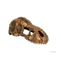 Exo Terra T-Rex Skull - Small