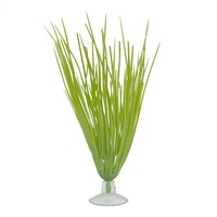 """Marina Betta Kit Hairgrass  Plant With Suction Cup,12.7cm (5"""")"""