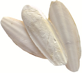 Living World Cuttlebones - Bulk