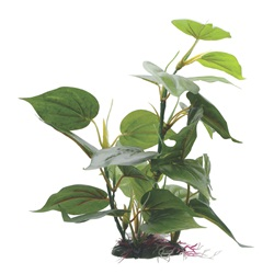 "Fluval Decorative Plants, Anubias, 30cm (12"") with Base"
